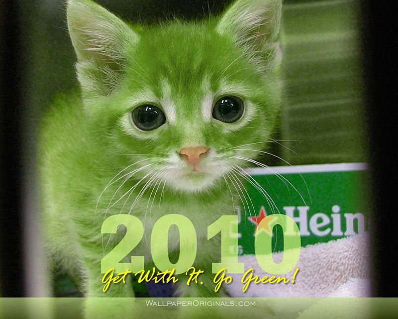 happy new year cat wallpaper picture